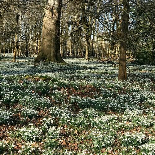 Snowdrop walk at Wexford Park