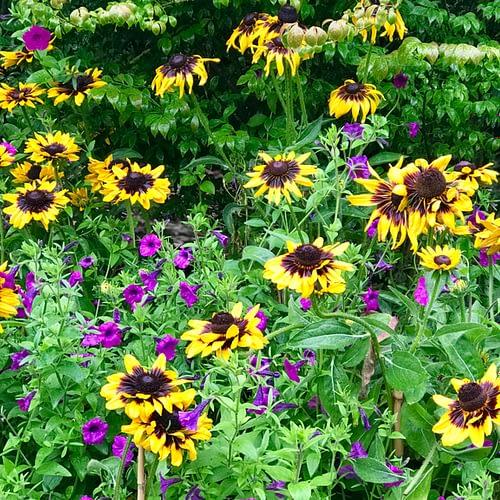 Malverleys Garden