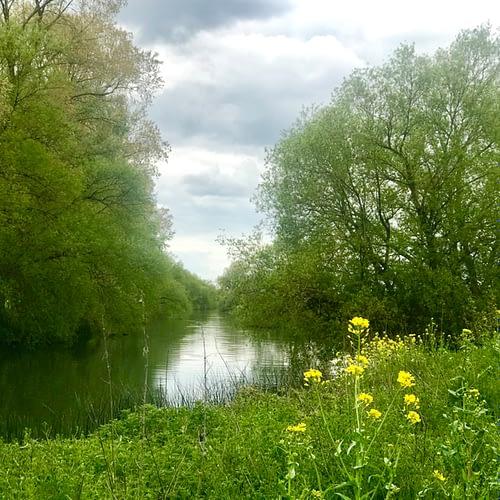 Thames Way near Kelmscott